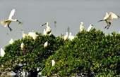 Guangdong puts 5-year ban on wild bird hunting